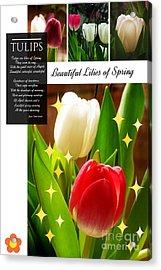 Beautiful Tulip Series 1 Acrylic Print