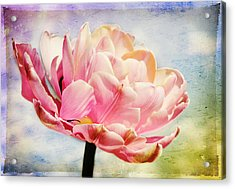 Acrylic Print featuring the photograph Beautiful Tulip by Trina  Ansel