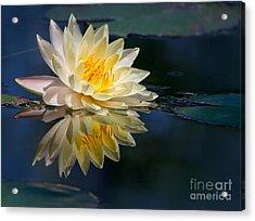 Beautiful Water Lily Reflection Acrylic Print