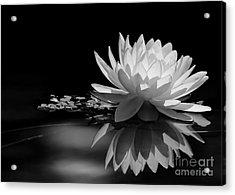 Beautiful Water Lily Reflections Acrylic Print