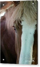 Beautiful Within Him Was The Spirit - 1 Acrylic Print by Linda Shafer
