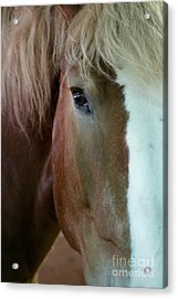 Beautiful Within Him Was The Spirit - 2 Acrylic Print by Linda Shafer