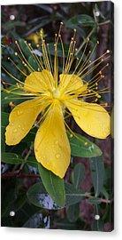 Beautiful Yellow Flower Acrylic Print