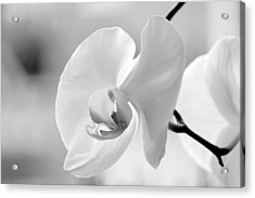 Acrylic Print featuring the photograph Beautifully Soft by Silke Brubaker