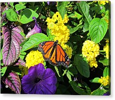 Acrylic Print featuring the photograph Beauty All Around by Cynthia Guinn