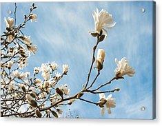 Beauty And Abundance Acrylic Print