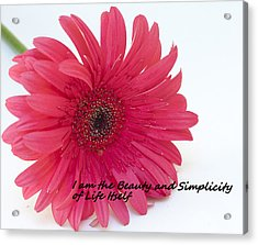 Beauty And Simplicity Acrylic Print