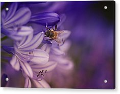 Beauty And The Bee Acrylic Print