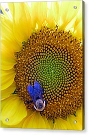 Beauty And The Bee Acrylic Print by Laura Corebello