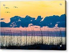 Beauty And The Birds Acrylic Print