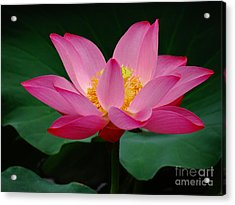 Beauty And The Deep Acrylic Print by Olivia Blessing