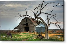Beauty And The Geese Acrylic Print