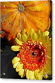 Beauty And The Squash 2 Acrylic Print by Sarah Loft