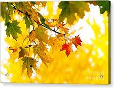 beauty Autumn Leaves Acrylic Print by Boon Mee