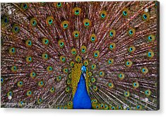 Acrylic Print featuring the pyrography Beauty by Elaine Malott