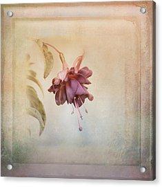 Beauty Fades Softly Framed Acrylic Print