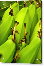 Beauty In Bannanas Acrylic Print by Justin Woodhouse