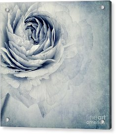 Beauty In Blue Acrylic Print by Priska Wettstein