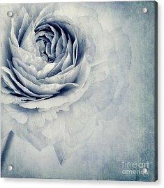Beauty In Blue Acrylic Print by Priska Wettstein