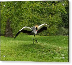 Beauty In Flight Acrylic Print by B Wayne Mullins