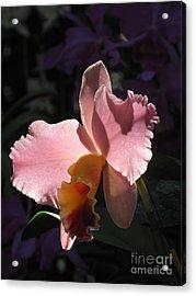 Beauty In Pink Acrylic Print by Monika A Leon