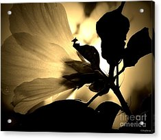 Beauty In Sepia Acrylic Print