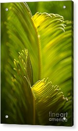 Beauty In The Sunlight Acrylic Print