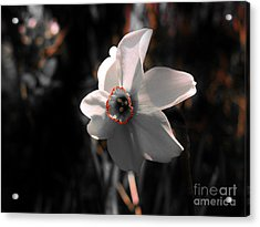 Acrylic Print featuring the photograph Beauty In The Woods by Sherman Perry