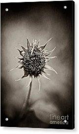 Beauty Of Loneliness Acrylic Print