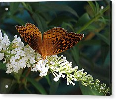 Beauty Of Nature Acrylic Print