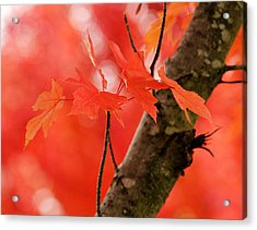 Beauty Of Red Acrylic Print