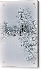 Beauty Of Winter Acrylic Print