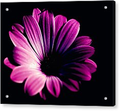 Beauty On The Black #2 Acrylic Print