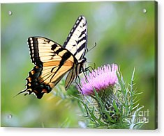 Beauty On Wings Acrylic Print by Geoff Crego