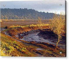 Acrylic Print featuring the photograph Beauty Revealed At Low Tide by I'ina Van Lawick