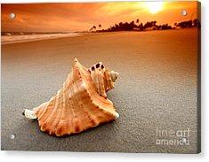 Beauty Shell Acrylic Print by Boon Mee