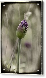 Acrylic Print featuring the photograph Beauty Unfurls Its Arms.. by Russell Styles