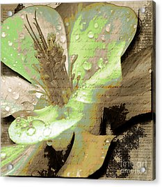 Beauty Viii Acrylic Print by Yanni Theodorou