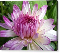 Beauty With Double Identity Acrylic Print