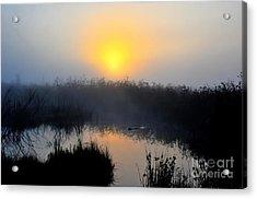 Beaver At Beaver Dam In Morning Acrylic Print by Dan Friend