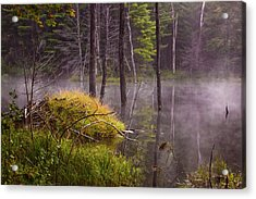 Acrylic Print featuring the photograph Beaver Lodge by Tom Singleton
