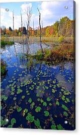 Beaver Marsh In Autumn Acrylic Print