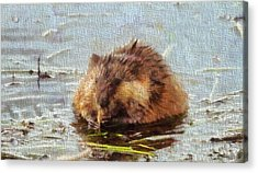 Beaver Portrait On Canvas Acrylic Print by Dan Sproul