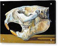 Beaver Skull 1 Acrylic Print by Catherine Twomey