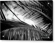 Acrylic Print featuring the photograph Maui Paradise Palms Hawaii Monochrome by Sharon Mau