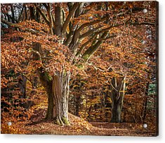 Bech Tree With Red Foliage Acrylic Print by Martin Liebermann
