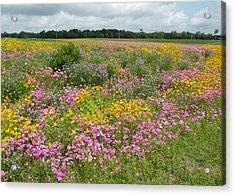 Becky's Field Of Flowers Acrylic Print