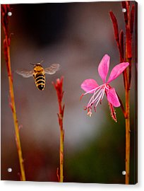 Acrylic Print featuring the photograph Bee And Flower by Janis Knight