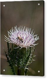 Bee And Pollination Pla 508 Acrylic Print