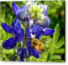 Bee And The Bonnet Acrylic Print